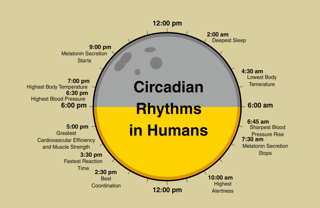 circadian cycle and adolescents' nonverbal intelligence One important general principle about this circadian system, relevant to adolescent sleep patterns, is that it adapts slowly to changes in sleep/wake schedules thus, adolescents rapidly shift sleep/wake schedules between school nights and weekends/vacations, which can be particularly problematic [18].