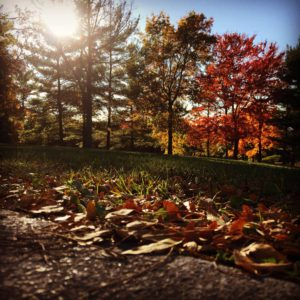 Creating Autumn in Nature and Writing